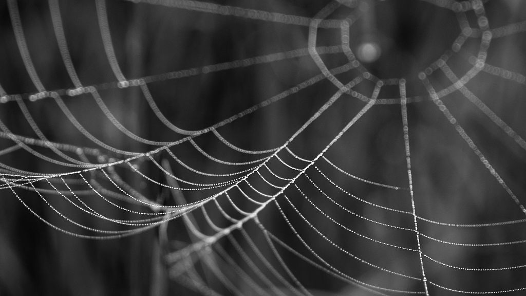 Le Dark Net